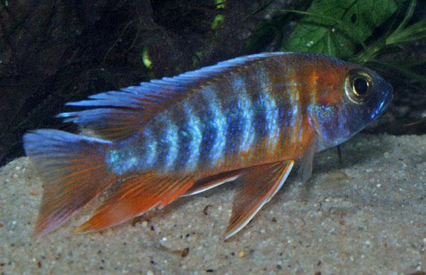A nice colourful male