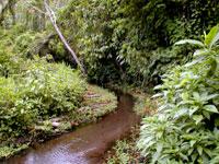 A clearwater stream in Ecuador.