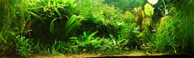 Plants are particularly useful in aquariums